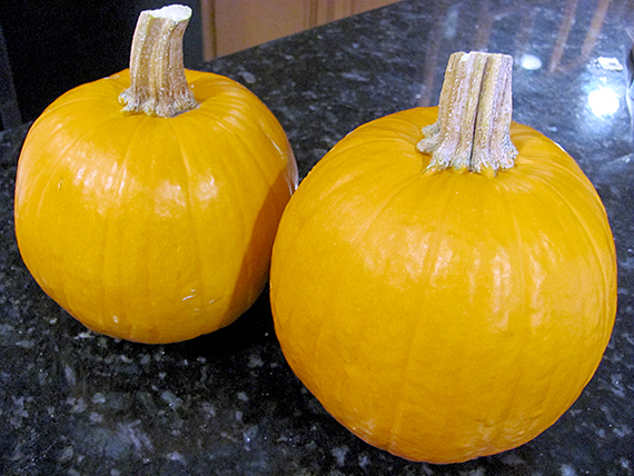 great-pumpkin-experiment-my-imperfect-kitchen-01