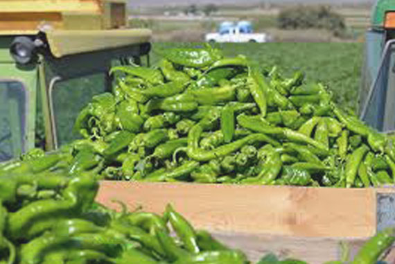 Hatch Chile Box