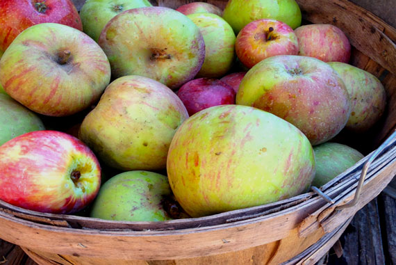 WillowbrookCiderApples