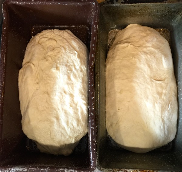 Idaho Potato Bread Loaves