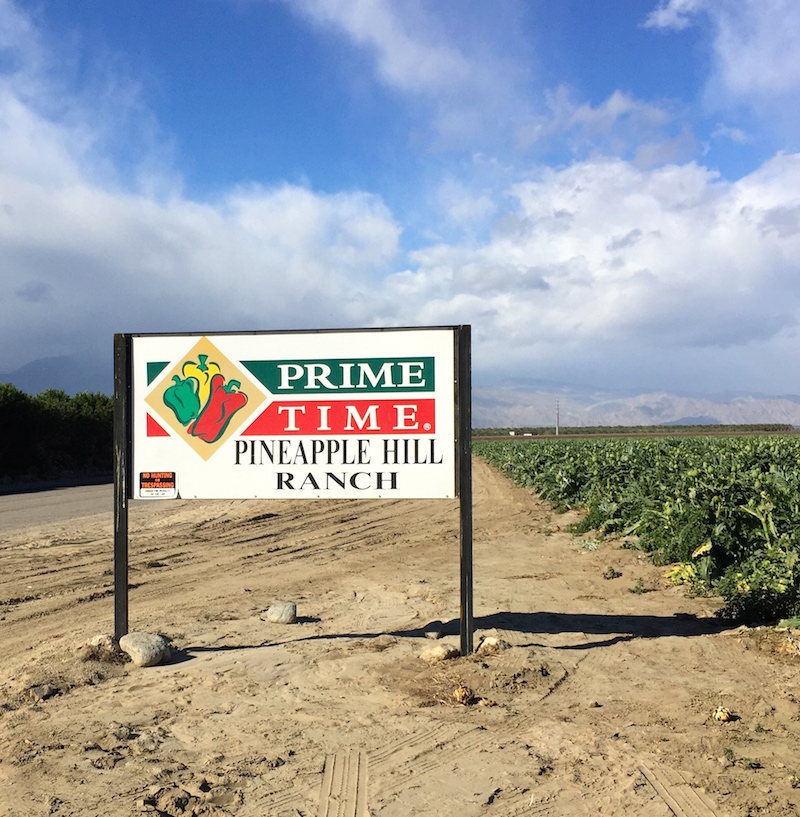 Prime Time Farms