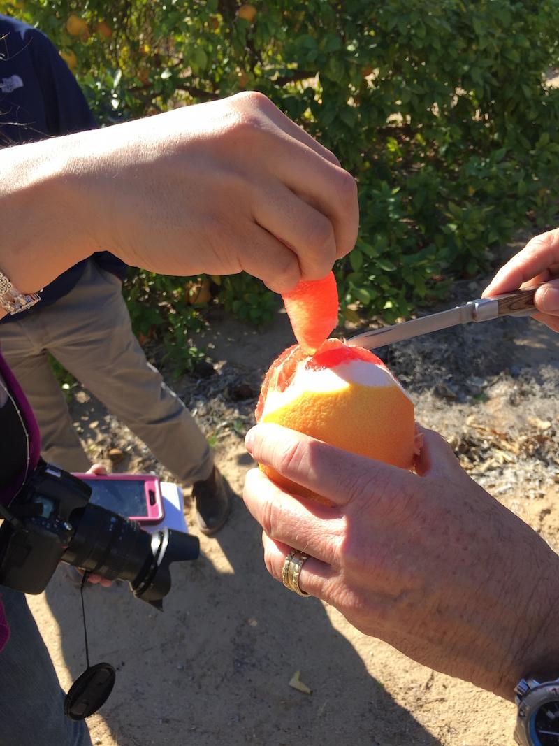 grapefruit slice at Sea View