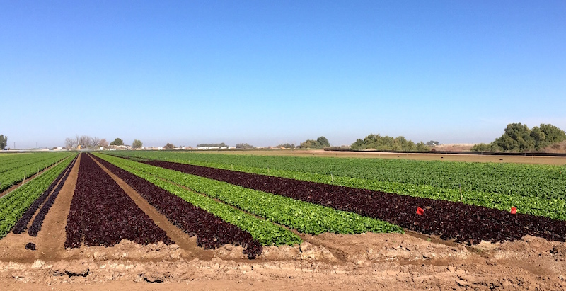 Imperial Valley and Coachella Valley Farm Tour